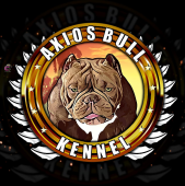 Axios Bull Kennel